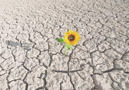 Favoriser la résilience avec la méthode Phosphoriales
