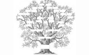L'arbre à projet